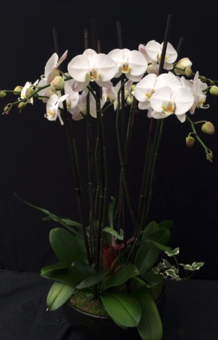 Large Orchid Arrangement